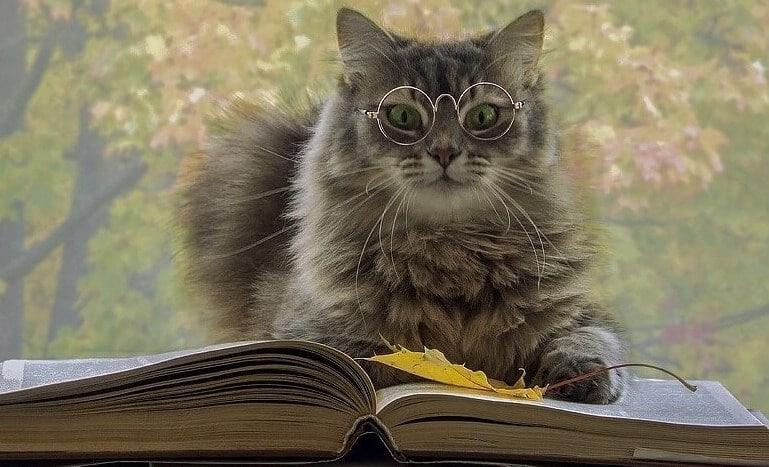 Тест. Угадай саморазвивающую книгу по цитате и получи 50 рублей