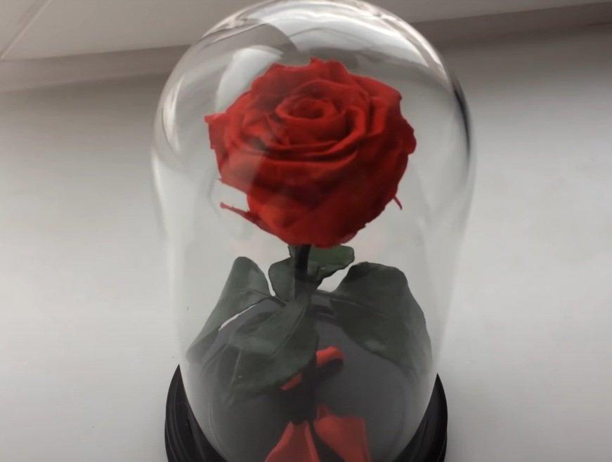 Роза в колбе - лучший подарок девушкам на 8 марта